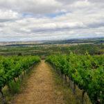 Escudero vineyards