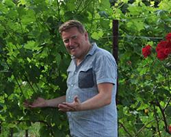 Pighin vineyard