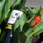 Trois Maisons voorjaar